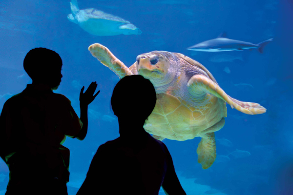 Adventure Aquarium S Christmas Celebration Visit